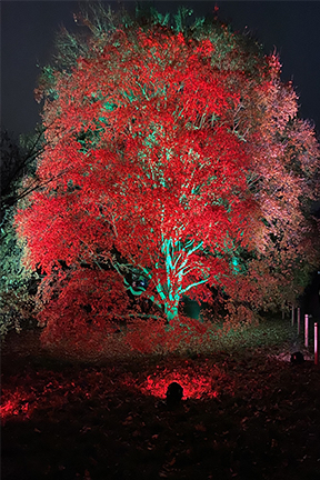 trees lit up in red