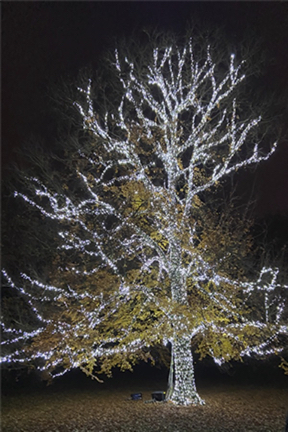 tree lit up in white