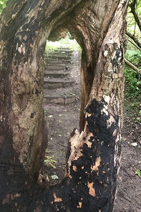 photo of a path taken through the split in a tree trunk